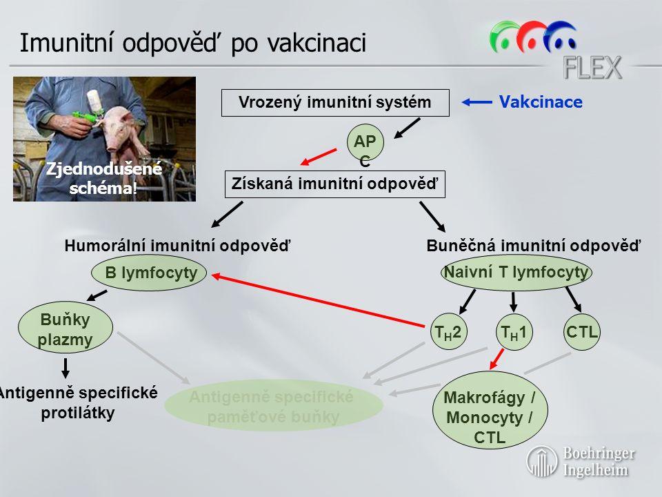Imunitní odpověď po vakcinaci Humorální imunitní odpověďBuněčná imunitní odpověď B lymfocyty Naivní T lymfocyty T H 2T H 1CTL Makrofágy / Monocyty / CTL Vakcinace AP C Antigenně specifické paměťové buňky Antigenně specifické protilátky Buňky plazmy Získaná imunitní odpověď Zjednodušené schéma .