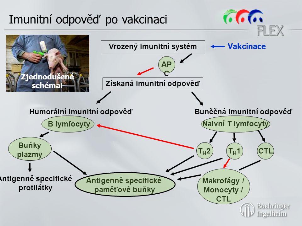 Imunitní odpověď po vakcinaci Získaná imunitní odpověď Humorální imunitní odpověďBuněčná imunitní odpověď B lymfocyty Naivní T lymfocyty T H 2T H 1CTL Vrozený imunitní systém Zjednodušené schéma .