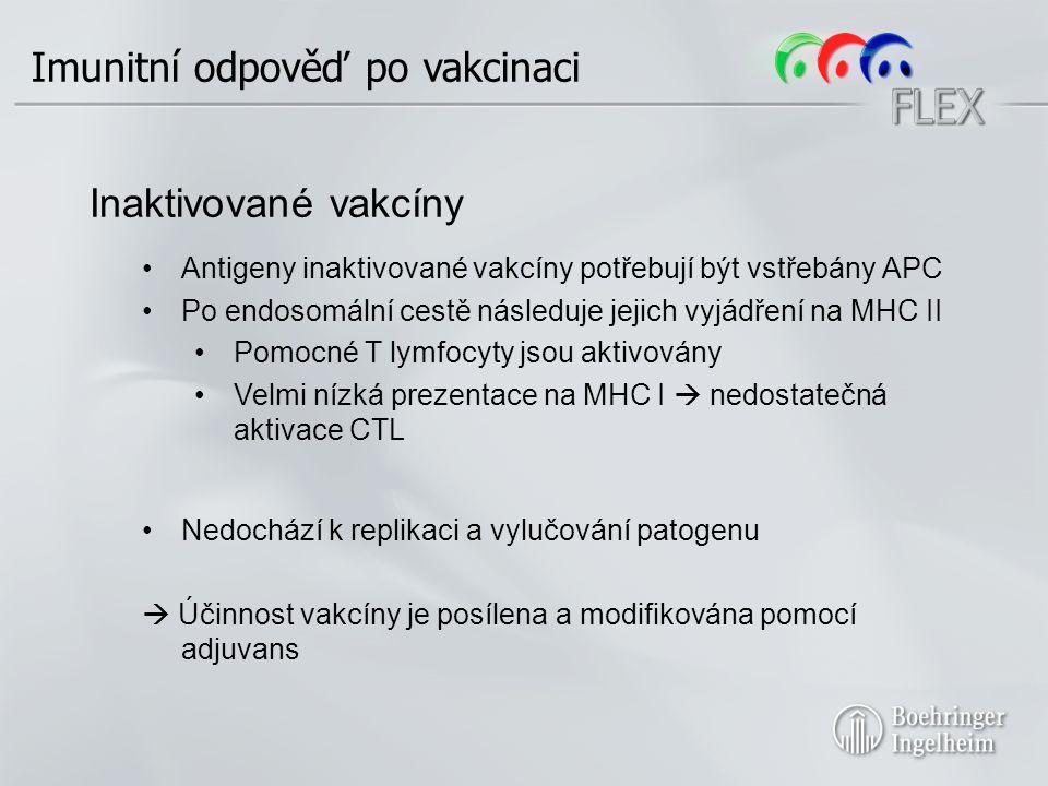 Imunitní odpověď po vakcinaci Inaktivované vakcíny Antigeny inaktivované vakcíny potřebují být vstřebány APC Po endosomální cestě následuje jejich vyjádření na MHC II Pomocné T lymfocyty jsou aktivovány Velmi nízká prezentace na MHC I  nedostatečná aktivace CTL Nedochází k replikaci a vylučování patogenu  Účinnost vakcíny je posílena a modifikována pomocí adjuvans