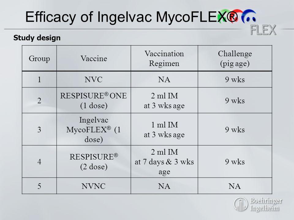 Efficacy of Ingelvac MycoFLEX® GroupVaccine Vaccination Regimen Challenge (pig age) 1NVCNA9 wks 2 RESPISURE ® ONE (1 dose) 2 ml IM at 3 wks age 9 wks 3 Ingelvac MycoFLEX ® (1 dose) 1 ml IM at 3 wks age 9 wks 4 RESPISURE ® (2 dose) 2 ml IM at 7 days & 3 wks age 9 wks 5NVNCNA Study design