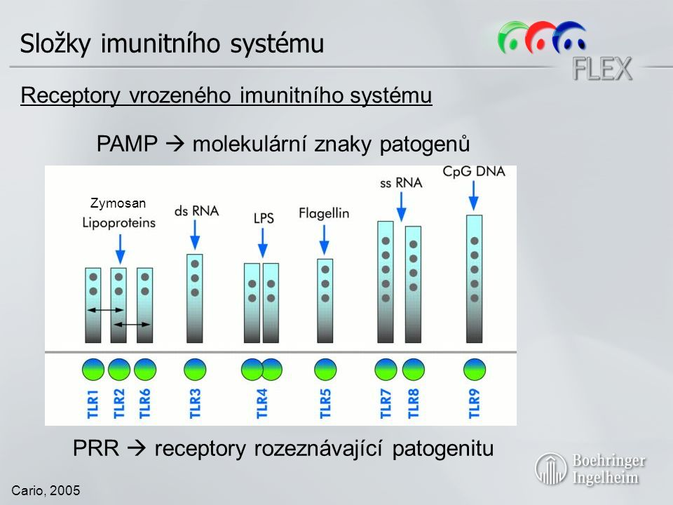 Cario, 2005 Receptory vrozeného imunitního systému Zymosan PAMP  molekulární znaky patogenů PRR  receptory rozeznávající patogenitu Složky imunitního systému