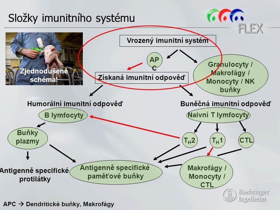 Získaná imunitní odpověď Humorální imunitní odpověďBuněčná imunitní odpověď B lymfocyty Naivní T lymfocyty T H 2T H 1CTL Antigenně specifické paměťové buňky Vrozený imunitní systém Antigenně specifické protilátky AP C Zjednodušené schéma.
