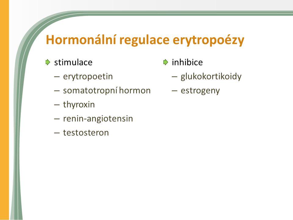 Hormonální regulace erytropoézy stimulace – erytropoetin – somatotropní hormon – thyroxin – renin-angiotensin – testosteron inhibice – glukokortikoidy