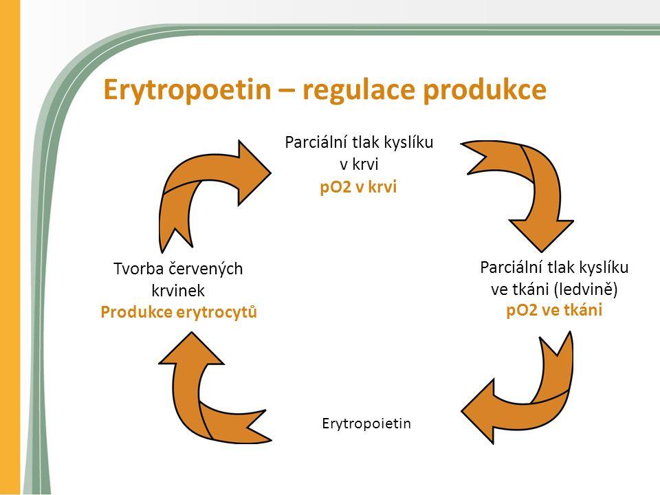 Erytropoetin – regulace produkce Produkce erytrocytů pO2 v krvi pO2 ve tkáni Erytropoietin Tvorba červených krvinek Parciální tlak kyslíku v krvi Parciální tlak kyslíku ve tkáni (ledvině)