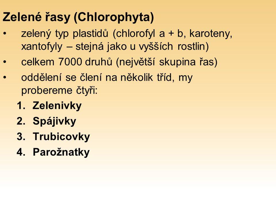 Zelené řasy (Chlorophyta) zelený typ plastidů (chlorofyl a + b, karoteny, xantofyly – stejná jako u vyšších rostlin) celkem 7000 druhů (největší skupina řas) oddělení se člení na několik tříd, my probereme čtyři: 1.Zelenivky 2.Spájivky 3.Trubicovky 4.Parožnatky