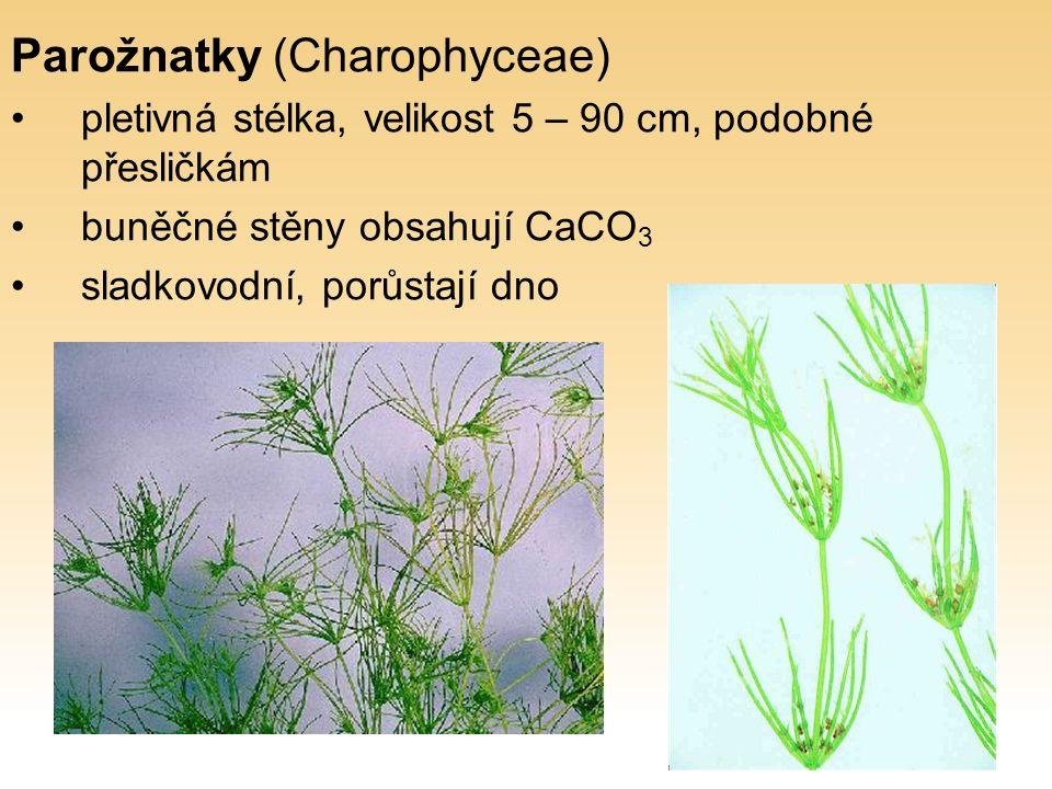 Parožnatky (Charophyceae) pletivná stélka, velikost 5 – 90 cm, podobné přesličkám buněčné stěny obsahují CaCO 3 sladkovodní, porůstají dno