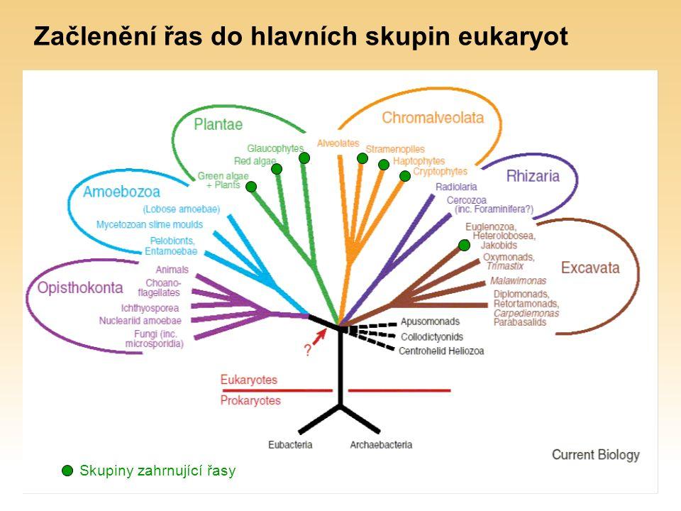 Začlenění řas do hlavních skupin eukaryot Skupiny zahrnující řasy