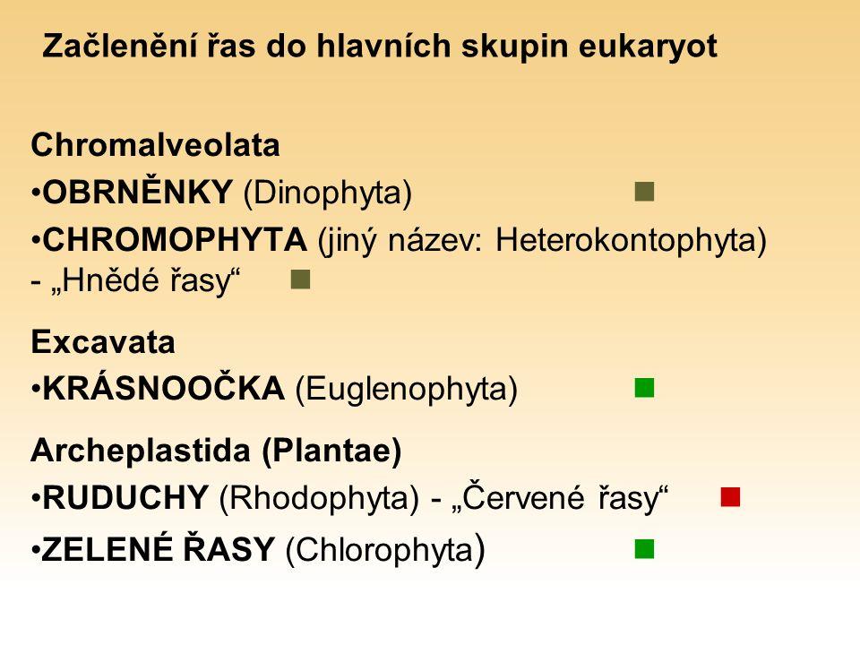 """Začlenění řas do hlavních skupin eukaryot Chromalveolata OBRNĚNKY (Dinophyta) CHROMOPHYTA (jiný název: Heterokontophyta) - """"Hnědé řasy Excavata KRÁSNOOČKA (Euglenophyta) Archeplastida (Plantae) RUDUCHY (Rhodophyta) - """"Červené řasy ZELENÉ ŘASY (Chlorophyta )"""