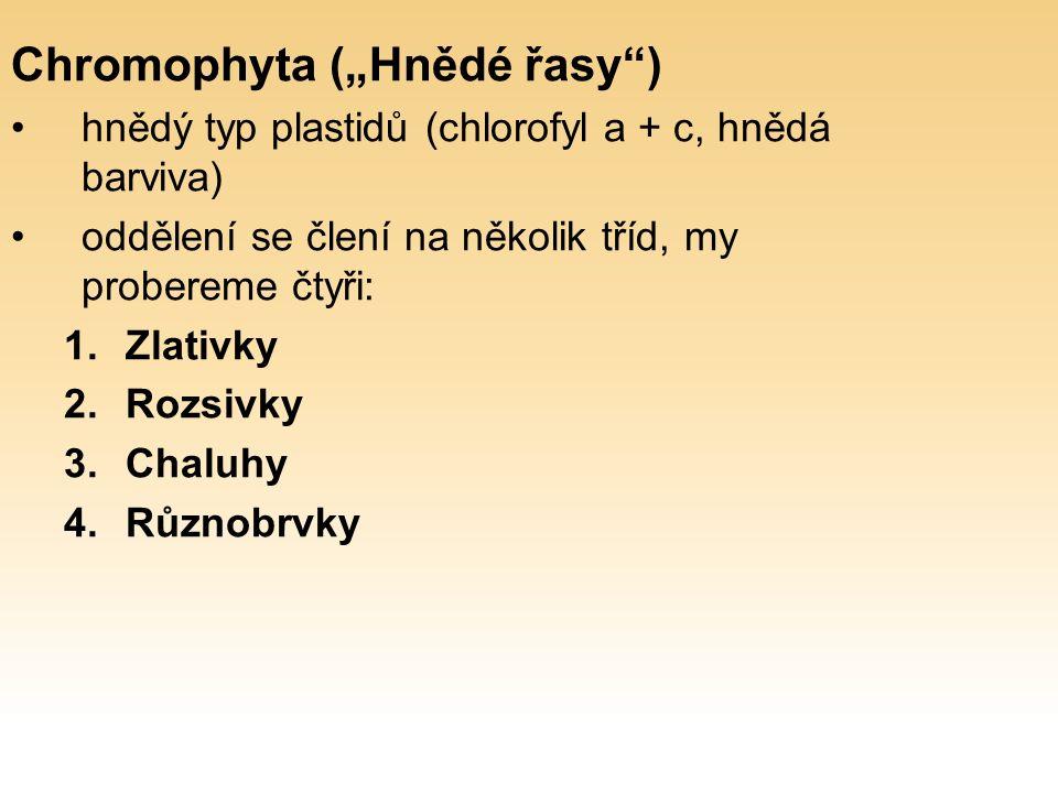 """Chromophyta (""""Hnědé řasy ) hnědý typ plastidů (chlorofyl a + c, hnědá barviva) oddělení se člení na několik tříd, my probereme čtyři: 1.Zlativky 2.Rozsivky 3.Chaluhy 4.Různobrvky"""