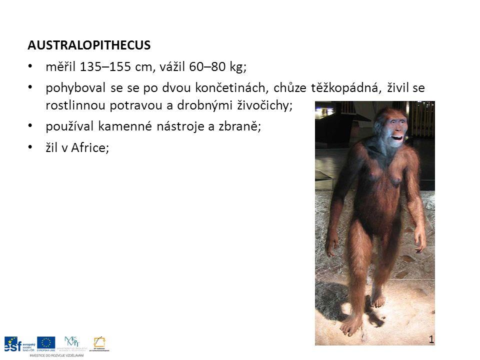 AUSTRALOPITHECUS měřil 135–155 cm, vážil 60–80 kg; pohyboval se se po dvou končetinách, chůze těžkopádná, živil se rostlinnou potravou a drobnými živočichy; používal kamenné nástroje a zbraně; žil v Africe; 1