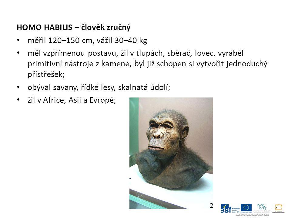 HOMO HABILIS – člověk zručný měřil 120–150 cm, vážil 30–40 kg měl vzpřímenou postavu, žil v tlupách, sběrač, lovec, vyráběl primitivní nástroje z kamene, byl již schopen si vytvořit jednoduchý přístřešek; obýval savany, řídké lesy, skalnatá údolí; žil v Africe, Asii a Evropě; 2