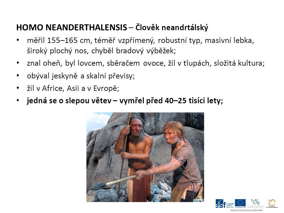 HOMO NEANDERTHALENSIS – Člověk neandrtálský měřil 155–165 cm, téměř vzpřímený, robustní typ, masivní lebka, široký plochý nos, chyběl bradový výběžek;