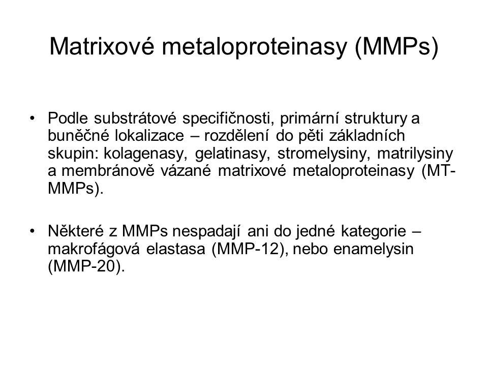 Matrixové metaloproteinasy (MMPs) Podle substrátové specifičnosti, primární struktury a buněčné lokalizace – rozdělení do pěti základních skupin: kolagenasy, gelatinasy, stromelysiny, matrilysiny a membránově vázané matrixové metaloproteinasy (MT- MMPs).
