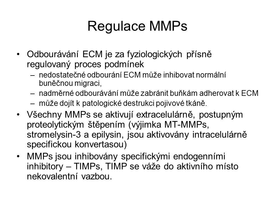 Regulace MMPs Odbourávání ECM je za fyziologických přísně regulovaný proces podmínek –nedostatečné odbourání ECM může inhibovat normální buněčnou migraci, –nadměrné odbourávání může zabránit buňkám adherovat k ECM –může dojít k patologické destrukci pojivové tkáně.