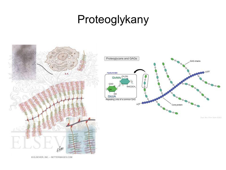 Proteoglykany