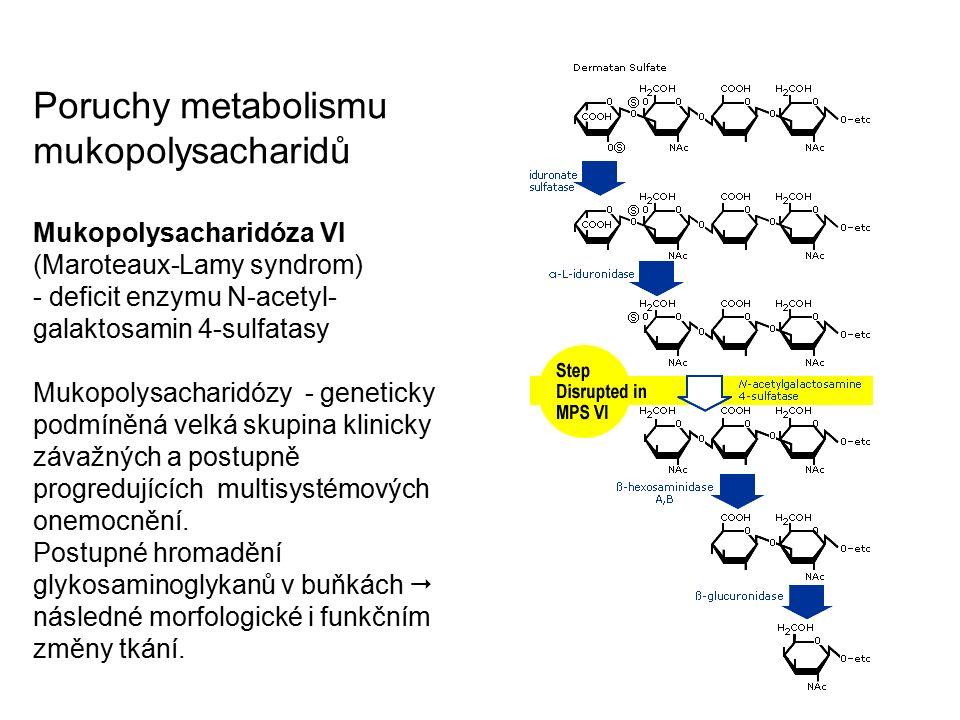 Poruchy metabolismu mukopolysacharidů Mukopolysacharidóza VI (Maroteaux-Lamy syndrom) - deficit enzymu N-acetyl- galaktosamin 4-sulfatasy Mukopolysacharidózy - geneticky podmíněná velká skupina klinicky závažných a postupně progredujících multisystémových onemocnění.