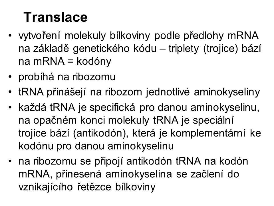 Translace vytvoření molekuly bílkoviny podle předlohy mRNA na základě genetického kódu – triplety (trojice) bází na mRNA = kodóny probíhá na ribozomu tRNA přinášejí na ribozom jednotlivé aminokyseliny každá tRNA je specifická pro danou aminokyselinu, na opačném konci molekuly tRNA je speciální trojice bází (antikodón), která je komplementární ke kodónu pro danou aminokyselinu na ribozomu se připojí antikodón tRNA na kodón mRNA, přinesená aminokyselina se začlení do vznikajícího řetězce bílkoviny