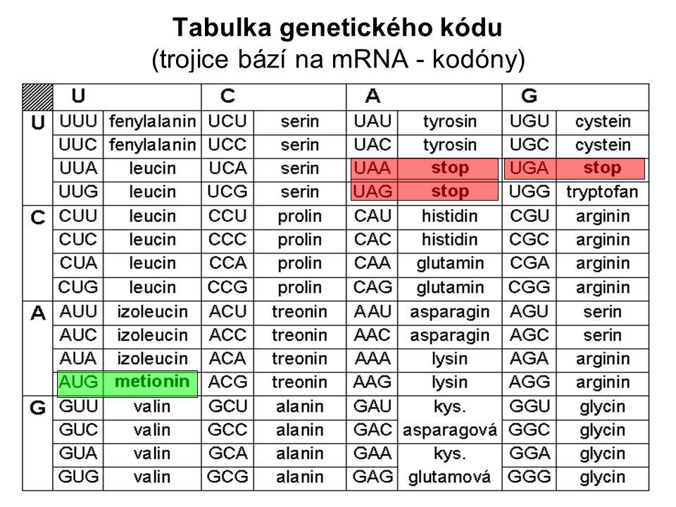 Tabulka genetického kódu (trojice bází na mRNA - kodóny)