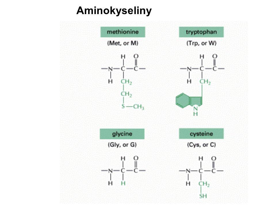 tRNA + aminokyselina