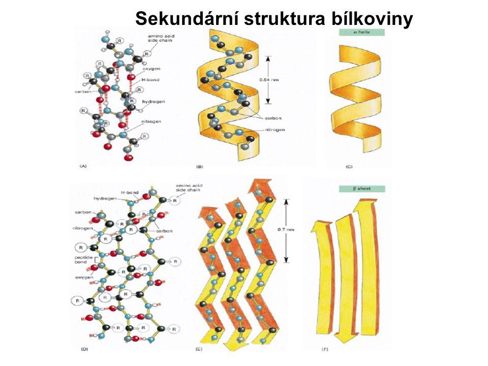 Tvar molekul bílkovin