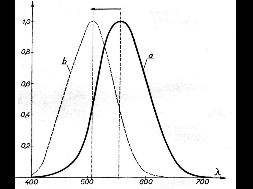 sítnice (11 vrstev) tyčinkyčípky žlutá skvrna (čípků 50x více než tyčinek) Purkyňův jev slepá skvrna (Mariottův pokus)