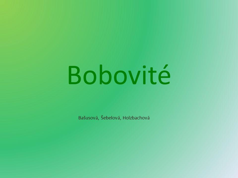 Bobovité Bašusová, Šebelová, Holzbachová