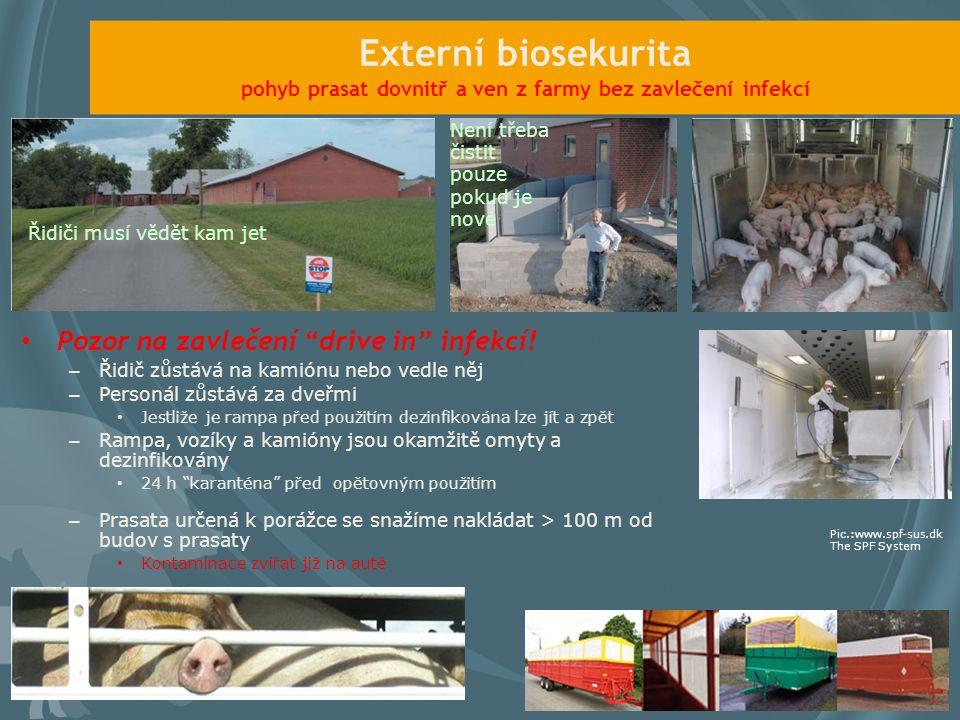 Externí biosekurita pohyb prasat dovnitř a ven z farmy bez zavlečení infekcí Pozor na zavlečení drive in infekcí.