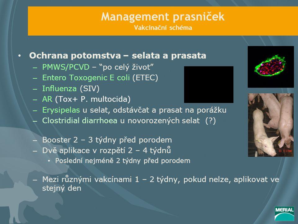 Management prasniček Vakcinační schéma Ochrana potomstva – selata a prasata – PMWS/PCVD – po celý život – Entero Toxogenic E coli (ETEC) – Influenza (SIV) – AR (Tox+ P.