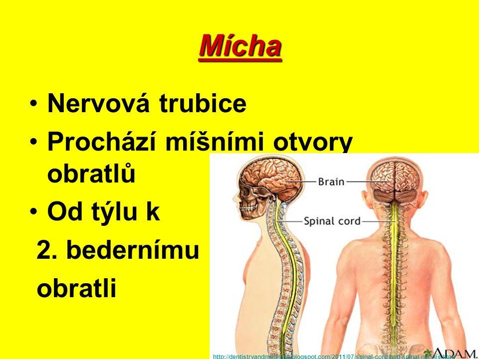CENTRÁLNÍ NS Mozek a mícha