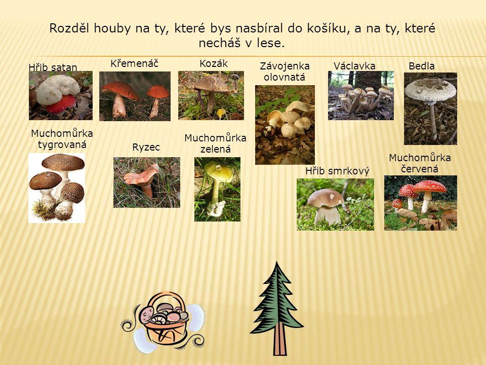 Rozděl houby na ty, které bys nasbíral do košíku, a na ty, které necháš v lese.