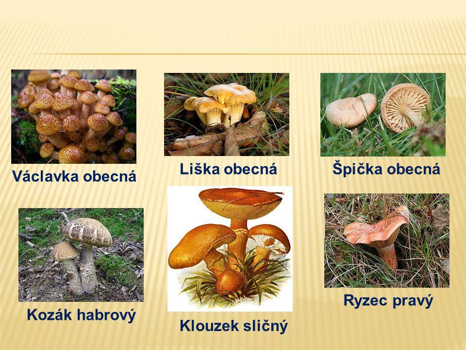 1.Sbíráme jen ty houby, které známe. 2.