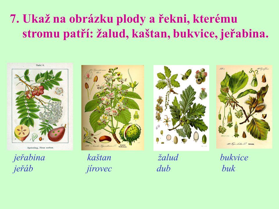 7. Ukaž na obrázku plody a řekni, kterému stromu patří: žalud, kaštan, bukvice, jeřabina.
