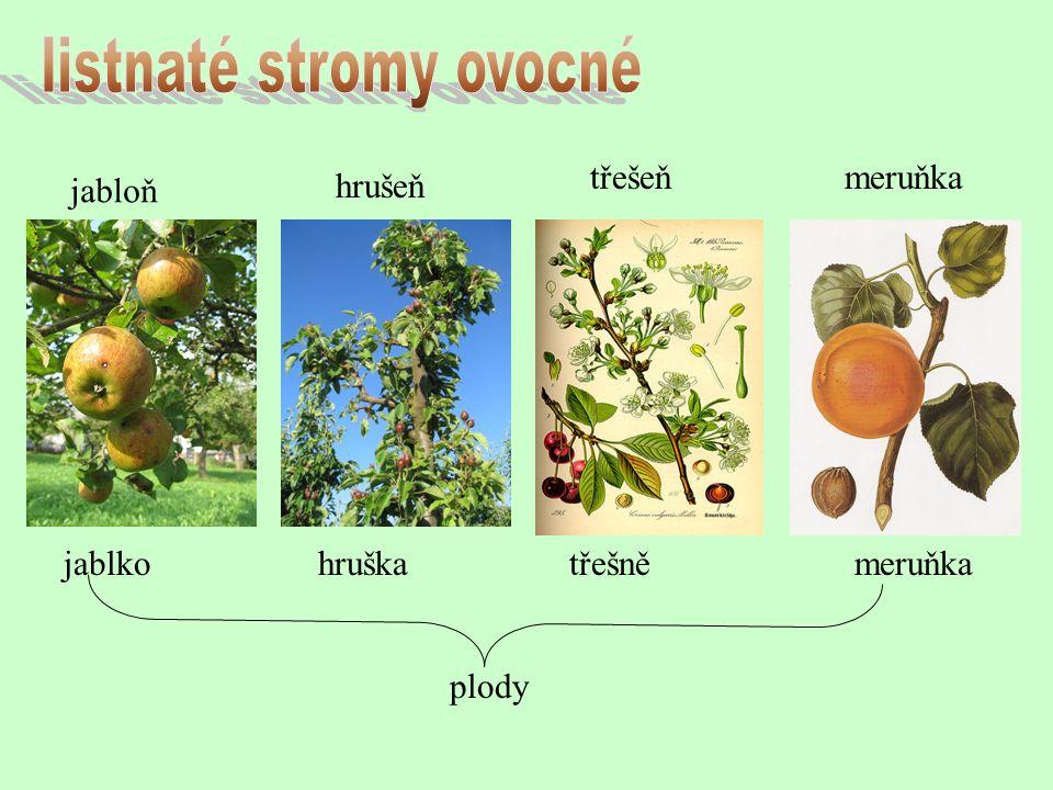jabloň hrušeň třešeňmeruňka jablko hruška třešně meruňka plody