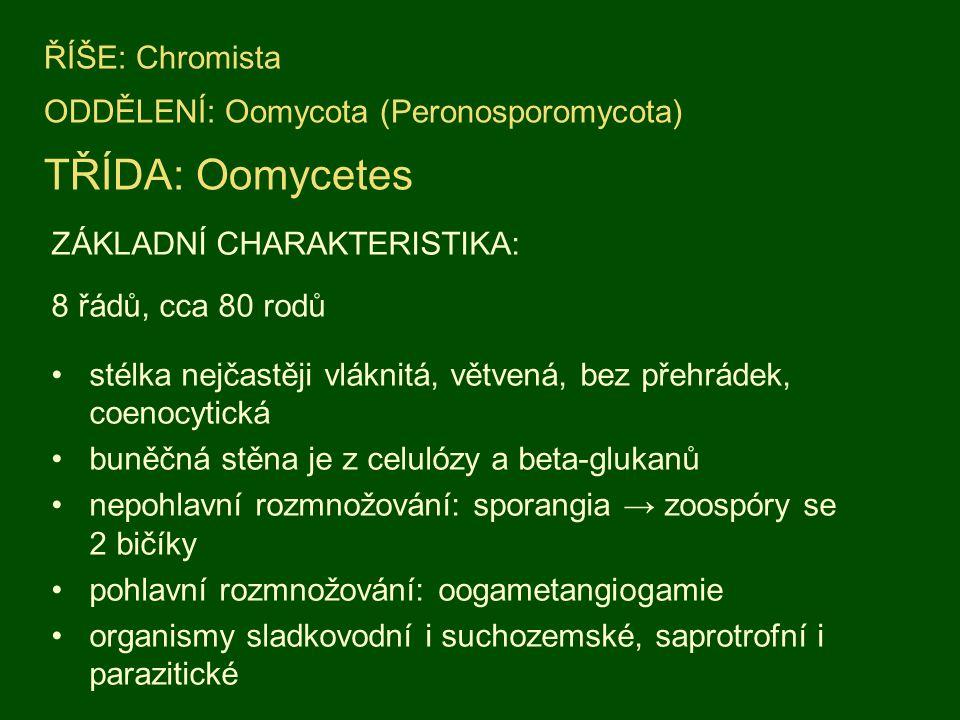 ZÁKLADNÍ CHARAKTERISTIKA: 8 řádů, cca 80 rodů stélka nejčastěji vláknitá, větvená, bez přehrádek, coenocytická buněčná stěna je z celulózy a beta-glukanů nepohlavní rozmnožování: sporangia → zoospóry se 2 bičíky pohlavní rozmnožování: oogametangiogamie organismy sladkovodní i suchozemské, saprotrofní i parazitické ŘÍŠE: Chromista ODDĚLENÍ: Oomycota (Peronosporomycota) TŘÍDA: Oomycetes