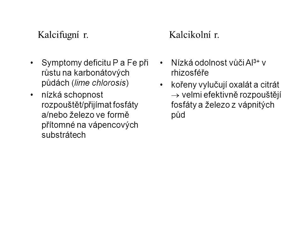 Symptomy deficitu P a Fe při růstu na karbonátových půdách (lime chlorosis) nízká schopnost rozpouštět/přijímat fosfáty a/nebo železo ve formě přítomné na vápencových substrátech Nízká odolnost vůči Al 3+ v rhizosféře kořeny vylučují oxalát a citrát  velmi efektivně rozpouštějí fosfáty a železo z vápnitých půd Kalcifugní r.Kalcikolní r.