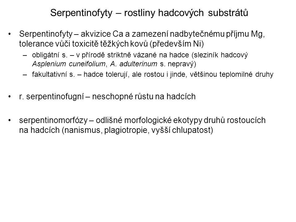 Serpentinofyty – rostliny hadcových substrátů Serpentinofyty – akvizice Ca a zamezení nadbytečnému příjmu Mg, tolerance vůči toxicitě těžkých kovů (především Ni) –obligátní s.