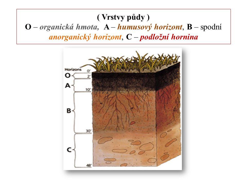 Složky půdy pevná anorganická složka (nerosty, horniny) pevná organická složka (humus) kapalná složka (půdní voda) plynná složka (kyslík, dusík a ostatní plyny) živá složka (tzv.