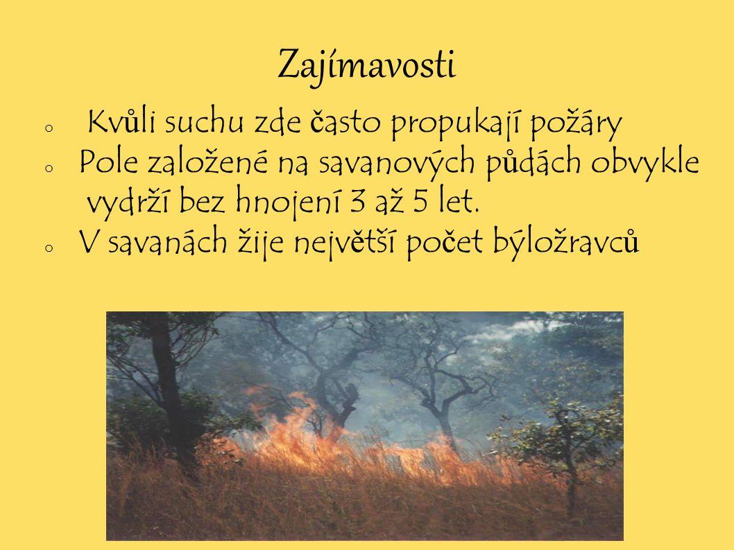 Zajímavosti o Kv ů li suchu zde č asto propukají požáry o Pole založené na savanových p ů dách obvykle vydrží bez hnojení 3 až 5 let. o V savanách žij
