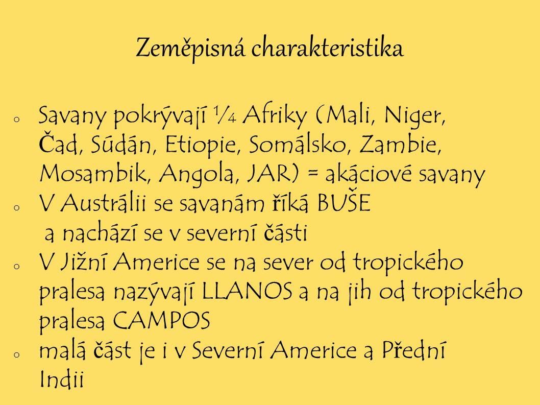 Zeměpisná charakteristika o Savany pokrývají ¼ Afriky (Mali, Niger, Č ad, Súdán, Etiopie, Somálsko, Zambie, Mosambik, Angola, JAR) = akáciové savany o