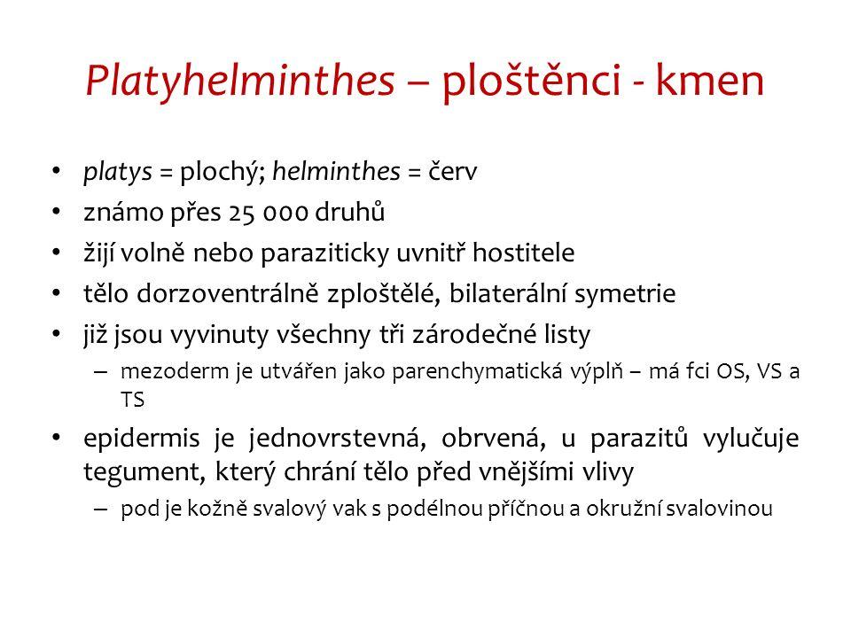 Platyhelminthes – ploštěnci - kmen platys = plochý; helminthes = červ známo přes 25 000 druhů žijí volně nebo paraziticky uvnitř hostitele tělo dorzoventrálně zploštělé, bilaterální symetrie již jsou vyvinuty všechny tři zárodečné listy – mezoderm je utvářen jako parenchymatická výplň – má fci OS, VS a TS epidermis je jednovrstevná, obrvená, u parazitů vylučuje tegument, který chrání tělo před vnějšími vlivy – pod je kožně svalový vak s podélnou příčnou a okružní svalovinou
