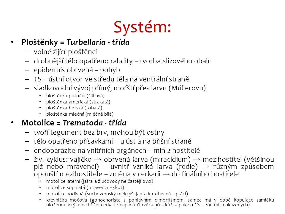 Systém: Ploštěnky = Turbellaria - třída – volně žijící ploštěnci – drobnější tělo opatřeno rabdity – tvorba slizového obalu – epidermis obrvená – pohyb – TS – ústní otvor ve středu těla na ventrální straně – sladkovodní vývoj přímý, mořští přes larvu (Müllerovu) ploštěnka potoční (šilhavá) ploštěnka americká (strakatá) ploštěnka horská (rohatá) ploštěnka mléčná (mléčně bílá) Motolice = Trematoda - třída – tvoří tegument bez brv, mohou být ostny – tělo opatřeno přísavkami – u úst a na břišní straně – endoparazité na vnitřních orgánech – min 2 hostitelé – živ.