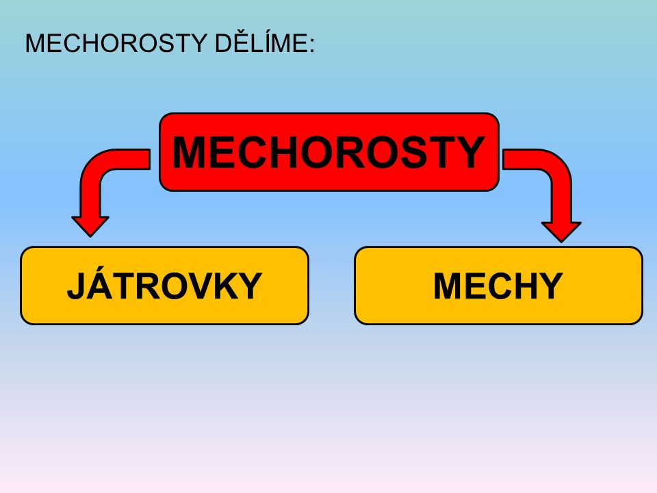 MECHOROSTY DĚLÍME: MECHOROSTY MECHYJÁTROVKY