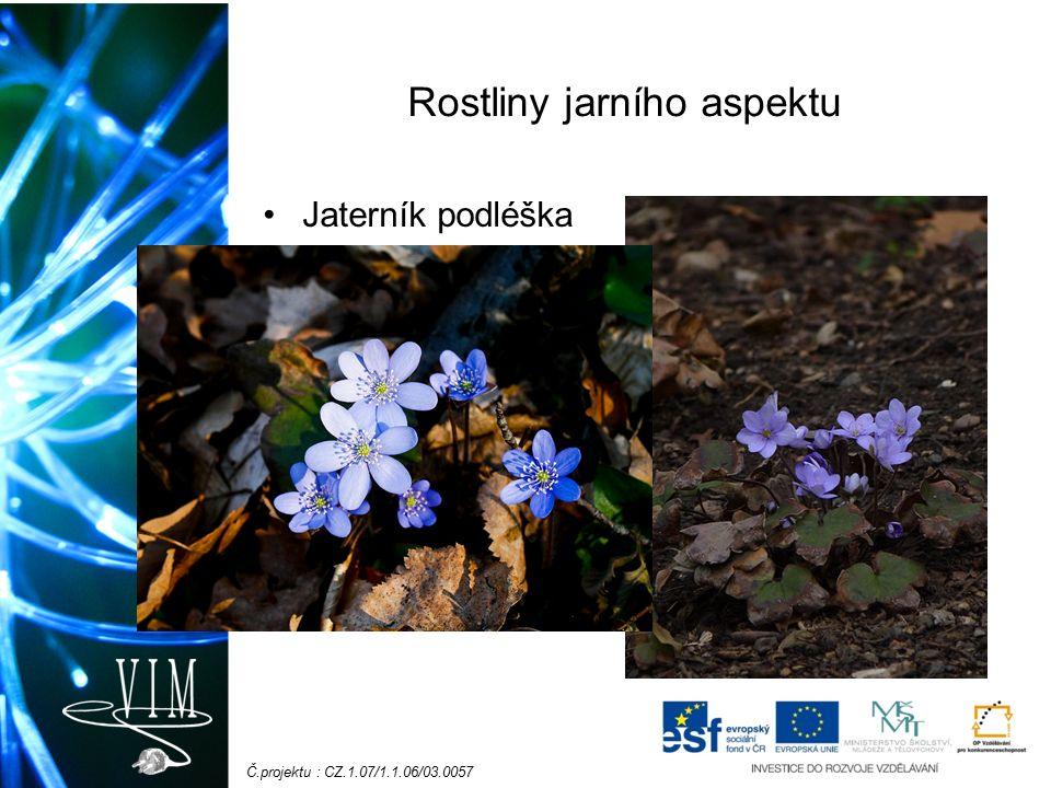 Č.projektu : CZ.1.07/1.1.06/03.0057 Rostliny jarního aspektu Jaterník podléška