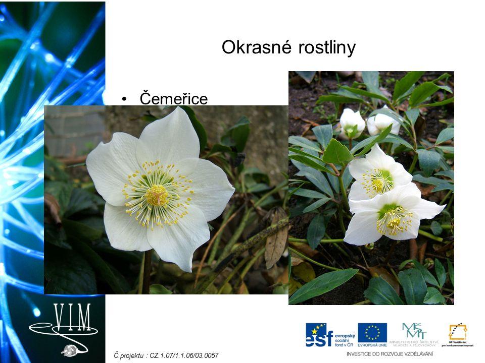 Č.projektu : CZ.1.07/1.1.06/03.0057 Okrasné rostliny Čemeřice
