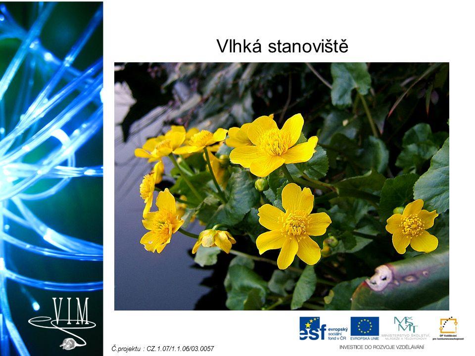 Č.projektu : CZ.1.07/1.1.06/03.0057 Vlhká stanoviště Upolín nejvyšší – vzácný, chráněný