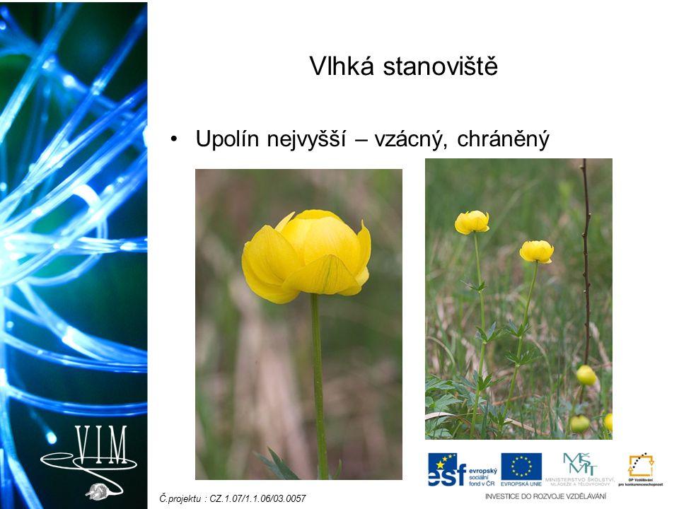 Č.projektu : CZ.1.07/1.1.06/03.0057 Suchá stanoviště Hlaváček jarní - chráněný