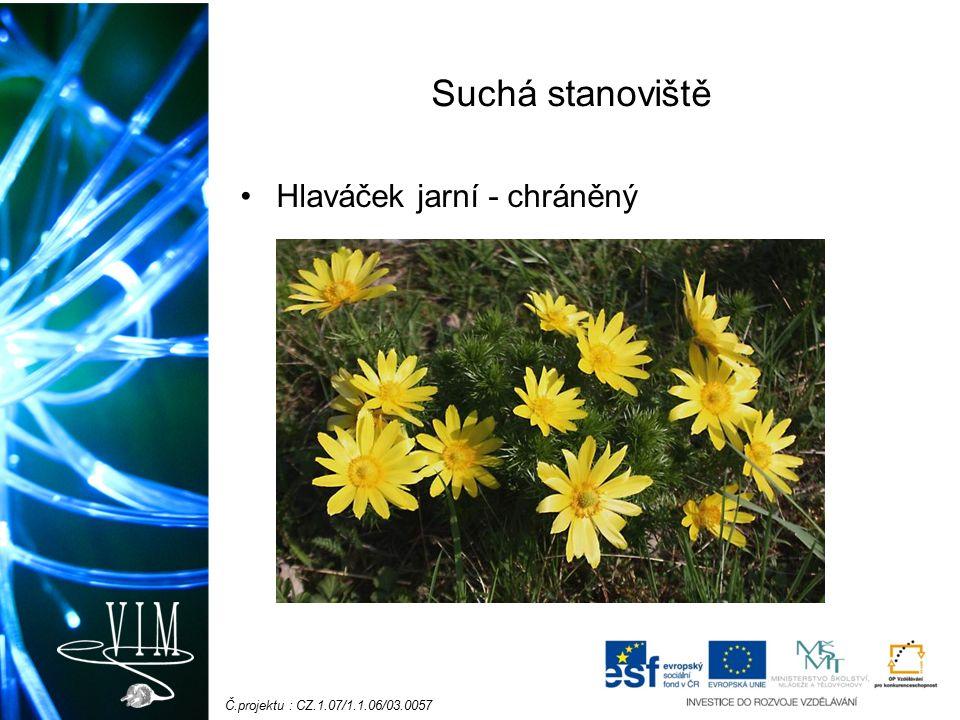 Č.projektu : CZ.1.07/1.1.06/03.0057 Suchá stanoviště Koniklec jarní - chráněný