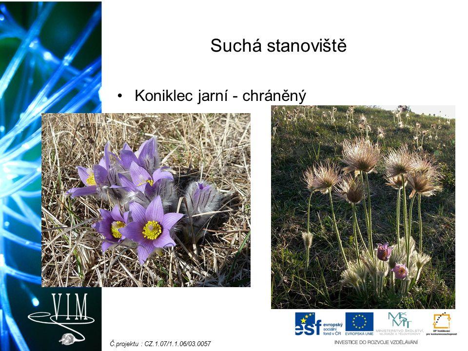 Č.projektu : CZ.1.07/1.1.06/03.0057 Rostliny jarního aspektu Sasanka hajní