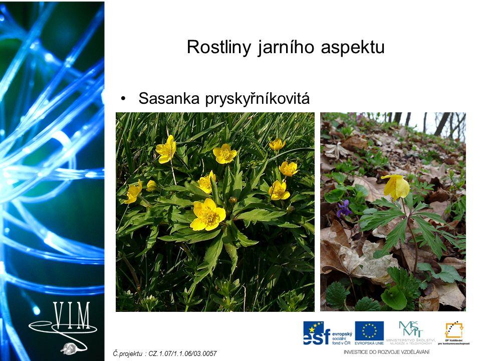 Č.projektu : CZ.1.07/1.1.06/03.0057 Rostliny jarního aspektu Sasanka pryskyřníkovitá