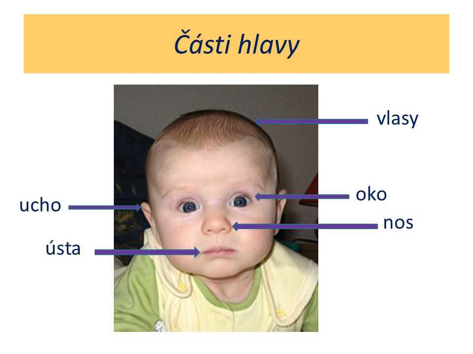Části hlavy vlasy oko ucho nos ústa